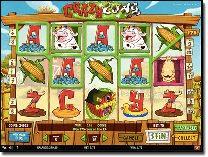 Crazy Cows online pokies by Play'n Go