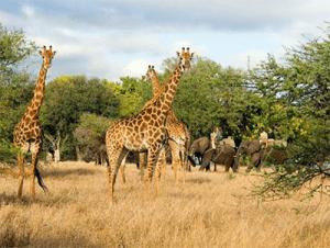 South Africa safari contest